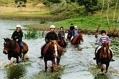 Horseback riding at Tasman Horse Treks
