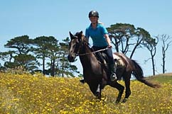 Horse riding fun at Tasman Horse Rides